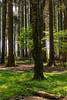 _DSC1833.jpg (Burghart-Alexander) Tags: orte deutschland pflanze poing wildpark tiere bäumeundsträucher europe bayern bundesland umwelt