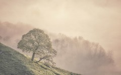Onlooker (Captain Nikon) Tags: lonetree hopevalley winnatspass inversion mist misty derbyshirepeakdistrict thepeakdistrict england atmospheric