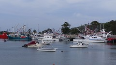 Beautiful Boats (chappell.nancy -) Tags: boats water flags sea ocean coast celebration ulladulla