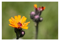 Mittags im Garten (glasseyes view) Tags: glasseyesview makro canon100mmmacro blossoms blooming flowers garden
