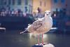 _DSC4701 (Joschka_van_der_Lucht) Tags: balticsee meer möwe ostsee see sommer strand vogel beach bird sand summer sun warnemünde rostock mecklenburgvorpommern deutschland de