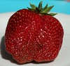 Strawberry (William Sc) Tags: strawberry food red healthy fresh closeup leaf single natural organic freshness close health fruit nutrient juicy berry fruity beere lebensmittel pflanze
