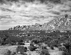 The Spine of Mojave (Scott Holcomb) Tags: granitemountains mojavenationalpreserve california asahipentax6x7 supertakumar6x7124105mmlens zenzabronica67mmso56•2cya3filter kodak400txfilm blackwhite 120film mediumformat 6x7 epsonperfectionv600 photoshopdigitalization