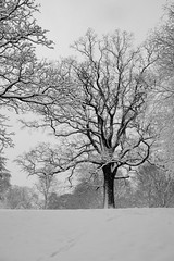 Footprints in the snow (Simon.Bence) Tags: snow trees landscape footprints bathuk victoriapark memories bw snowscape bnw blackandwhitephotography treescape