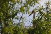 cigogne blanche-0004 (philph0t0) Tags: cigogne blanche ciconia white stork cigogneblanche ciconiaciconia whitestork bird oiseau nid nest