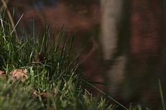 Creek reflection (Luke6876) Tags: creek autumn reflection grass