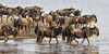 Wildebeest Crossing ... (AnyMotion) Tags: bluewildebeest commonwildebeest whitebeardedwildebeest weisbartgnu streifengnu blauesgnu connochaetustaurinus antelope antilope water wasser crossing durchquerend 2018 anymotion sidearm nebenarm lakemasek ngorongoroconservationarea tanzania tansania africa afrika travel reisen animal animals tiere nature natur wildlife 7d2 canoneos7dmarkii