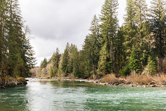 Song Of The River (John Westrock) Tags: nature river trees overcast cloudy forest northbend washington pacificnorthwest canoneos5dmarkiii canonef2470mmf28lusm