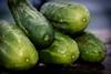Pepinos, Feb '18 (Boslok) Tags: veggies vegetables organic ecologic nutritive colorful antioxidants healthy conscious boslok canon t2i 1755 buenosaires argentina foodstyling food eat farm pickles pepinos