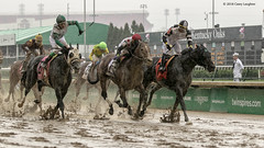 Too Early to Celebrate (Casey Laughter Media) Tags: 2018copyright churchilldowns kentuckyderby winner kentucky louisville canon canon7dmii canonphotography canonusa canonlens action actionphotography sports sportsphotography thoroughbred racehorse horse horseracing weather wet rain