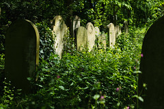 Luminous [Explored] (ShrubMonkey (Julian Heritage)) Tags: cemetery graveyard tombstones light graves burialground serene necropolis gothic grave stone awalkamongthetombstones overgrown nature london magnificentseven towerhamlets reclamation dappledlight