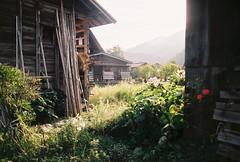 Backend: Shirakawa-go (cactus_chef) Tags: japan 2016 olympus om1 fujifilm fuji film iso200 iso 200 iso400 olympusom1 travel 28mm 50mm 18 f18 f28 om bellhowell 50mmf18 28mmf28 backpacking sooc shirakawa shirakawago gifu gifuprefecture historic unesco historictown village wild planting greenery xperia xtra