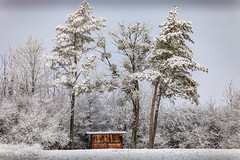 cabane (heiserge) Tags: arbres trees snow landscape winter neige europe hiver pines france pin moselle retonfey paysages lorraine greatphotographers