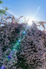 DSC03532-Lr (slam.photo) Tags: paris spring printemps