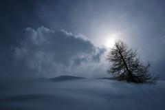Atmospheric (south*swell) Tags: zermatt switzerland snow cold atmospheric tree