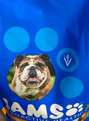 B is for Blue & Bulldog (BKHagar *Kim*) Tags: bkhagar blue bulldog iams dogfood bag package challenge b letterb julesphotochallengegroup
