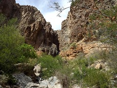 lower burro mesa (h willome) Tags: 2018 texas desert hiking bigbend bigbendnationalpark lowerburromesapourofftrail