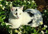 """""""Cat""""astrophe something's in the strawberries (robbie20161) Tags: animals cats sunshine shadows strawberries strawberry flowers spring nature cute"""