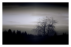 Coming home (undefinable moods) Tags: home birds forest monochrom flying arrival crows blackwhite night shadow light sunset trees sky clouds countryside landscape dark silhouette branches journey nature
