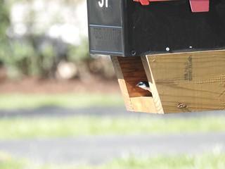 Blue and white Mailbox Bird