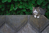 K_1_2902.jpg (akahigeg) Tags: 猫