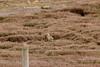 IMG_2013 (monika.carrie) Tags: monikacarrie wildlife scotland glenesk