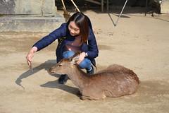 selfie? (ELENA TABASSO) Tags: viaggi viaggio travel travels cervo cervi japan giappone miyajima