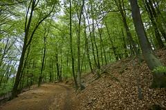 forest (Jos Mecklenfeld) Tags: spring lente frühling forest wald bos teutoburgerwald dörentherklippen nature natur natuur sonya6000 sonyilce6000 sonyepz1650mm selp1650 northrheinwestfalen germany de hiking wandern wandelen