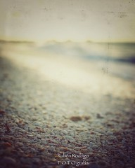What the water gave me (Mister Blur) Tags: uaymitún beach yucatán méxico shells sand yucatan mexico happy bokeh wednesday blur background low pointofview pov shallow depthoffield dof sunset snapseed nikon d7100 35mm f25 rubén rodrigo fotografía