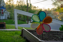 Colorful kid's windmill in our garden (John Brighenti) Tags: colorful windmill toy evening sunset spring garden grass green road house yard home residential neighborhood rockville maryland md sony alpha a7 camera photography