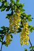 18-05_DSCF9441 (Jacek P.) Tags: kwiaty flowers botaniczny wiosna spring