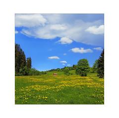 Die Offenheit des Himmels . . . (photoarchiv65) Tags: landscape austria flowers meadow pasture sky heaven blue clouds green spring sunshine trees hut cabin barn hills valley felixaustria