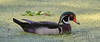 05-08-18-0016579 (Lake Worth) Tags: animal animals bird birds birdwatcher everglades southflorida feathers florida nature outdoor outdoors waterbirds wetlands wildlife wings