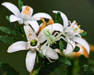 Wildflower surprise
