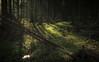 Eifel Lights (Netsrak) Tags: baum bäume eifel europa europe farbe forst frühling landschaft natur wald forest landscape nature spring tree trees woods