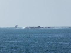 P1300723 (supermimil) Tags: aberwrach bretagne france europe britany coast côte mer ocean large 2018 mai cata sailing