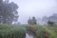 Misty Morning (Martine Lambrechts) Tags: misty morning spring nature landscape waterway tree water