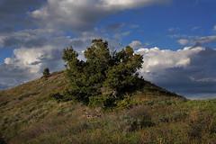 DSC01071 (kyleddsn) Tags: hiking utah ogden spring