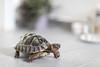 herrmann unterwegs (dadiolli) Tags: trier rheinlandpfalz deutschland de turtle schildkröte