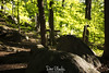 Morning Light on Trail (Dave Blinder) Tags: 483a0153 pyramidmountainnaturalhistoricareaboonton morriscountyparkcommissionpicture mcpc new jersey nature landscape 2018 spring art