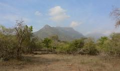 Sigur (siddarth.machado) Tags: dry forest sigur plateau westernghats savanna landscape ecosystem arid thorn jungle thickets scrub land nature naturalbeauty