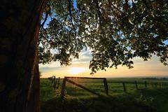 Aprilabend 2018 (Rolf Pahnhenrich) Tags: landschaft himmel sonnenuntergang abendstimmung sonnenlicht baum natur sonne rolfpahnhenrich wiese gras feld