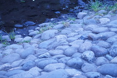 ☆Stone and the River (SnowM28) Tags: kanagawa yamato izuminomori blue sony a5000 55210mm park