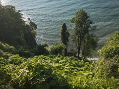 (Giorgi Natsvlishvili) Tags: batumi adjara georgia blacksea blackseacoast batumiskyline batumibotanicalgarden