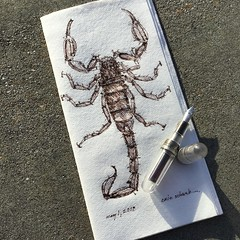 Happy May Day!! (schunky_monkey) Tags: fountainpen penandink ink pen illustration art drawing draw sketching napkinsketch sketch napkin tail poisonous poison scary insect scorpion