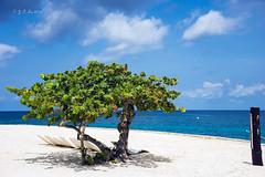 沙滩上的绿树 (幻影留梦) Tags: recreation fun ocean sea vacation serenity costa maya cozumel mexico caribbean blue sky cloud water sun