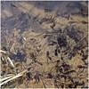höfen 11 (beauty of all things) Tags: eifel monschau höfen narzissenroute wasser water