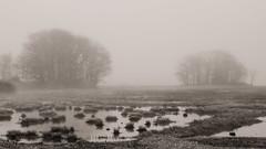 Fog in the Marsh (jtr27) Tags: dscf8193xl2 fuji fujifilm xe2s xe2 xtrans minolta md zoom 75150mm f4 f40 manualfocus scarborough marsh maine newengland blackandwhite bw monochrome landscape fog