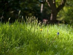 Critique of pure love (robert.jurjevic) Tags: purelove nymans england westsussex englishgarden