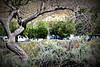 Camping (Luke Y.) Tags: ribbet camping acton california thousandtrails rv trailer tree travel brush coachmen catalina campground rvpark leisure vacation soledadcanyon